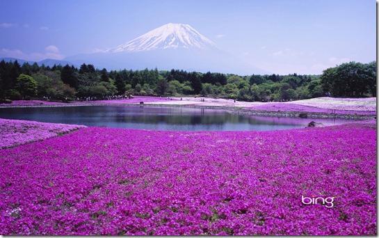 Fuji Shibazacra festival