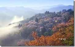 Cherry blossoms at Mt. Yoshino
