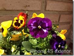 iPhone4sVSLumia900-2