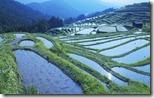 段々畑 (Rice paddy, Mie prefecture, Japan)
